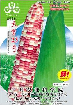 1 Original Pack, Graines 100g / pack, couleur glutineux maïs NO.23 maïs Graines, Heirloom NON-ogm Corn Tasty Organic