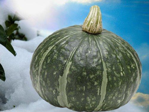 かぼちゃ 10kg (4〜7玉) 北海道剣淵産他 ホクホクした甘味のある南瓜(カボチャ)ほっこり 味平など