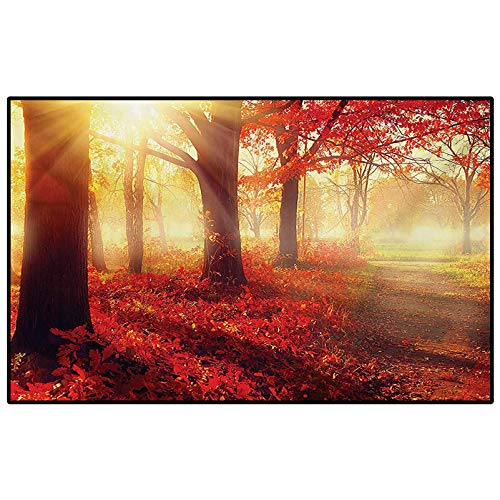 Woodland Rugs for Girls Rooms Rugs for Kitchen Floor Sun Beams Through Misty Old Forest in Fall Season Morning View Dreamy Picture Carpet Chair mat Yellow Red 4 x 6 Ft