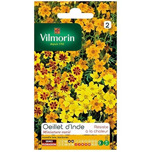 Vilmorin - Sachet graines Oeillet d'inde miniature varié (Tagetes signata)