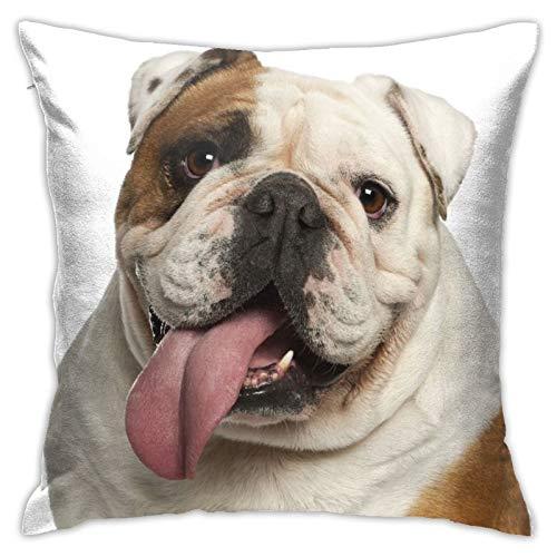 LOSNINA Fundas de Almohada, Perro marrón Bulldog Inglés años Delante de Studio Arrugas Blancas, Sofá temático Sofá Sala de Estar Interior Exterior Decoración del hogar (18 '* 18') 1 Pieza