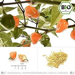 Pepperworld Orange Lantern Bio Chili-Saatgut, 10 Korn, Chili-Schote zum Anpflanzen, aus Peru