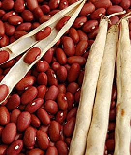 Buschbohnen Trockenkochbohne Red Kidney Samen