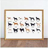 XingChen Impresiones de imágenes 20x30cm sin Marco Divertidos Perros Lindos de Diferentes Razas Cartel de Arte Animales de Raza Pura Imagen Decoración para el hogar Animales domésticos Pintura