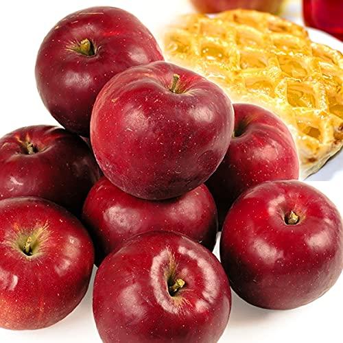 国華園 りんご 青森産 紅玉 木箱 約20�s 1箱 食品