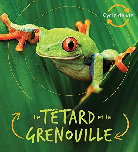 Cycle de Vie: Le Têtard Et La Grenouille