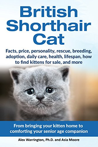 British Shorthair Cat: From bringing your kitten home to...