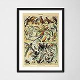 Ocean Chart, Animales Botánicos, Setas, Arte Educativo, Pintura En Lienzo, Carteles E Impresiones, Imágenes En La Pared, Decoración Clásica, Decoración Del Hogar, Affiche A97 Sin Marco 50X70Cm