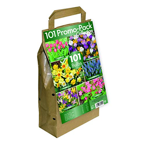 GreenBrokers Bulb Collection-Big Buy Value Pack-6 Spring Flowering Varieties (Pack of 101), 101 Mix
