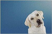 青い背景のカメラで頭を傾けるHD好奇心が強い白い犬9019186(大人のためのプレミアム1000ピースジグソーパズル19x27)