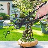 Cisailles à bonsaï professionnelles, pratiques pour la modélisation et la coupe globale et partielle des bonsaïs. Petite taille, structure compacte, facile à transporter, convient aux jardins, vergers, plantes en pot, bonsaï, etc. Matériaux sélection...