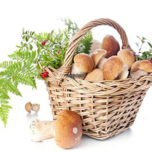 GETSO Samen-Paket: 9: New Essbare Gesundheit Gemüsesamen Myzel Spores Rlwh 03