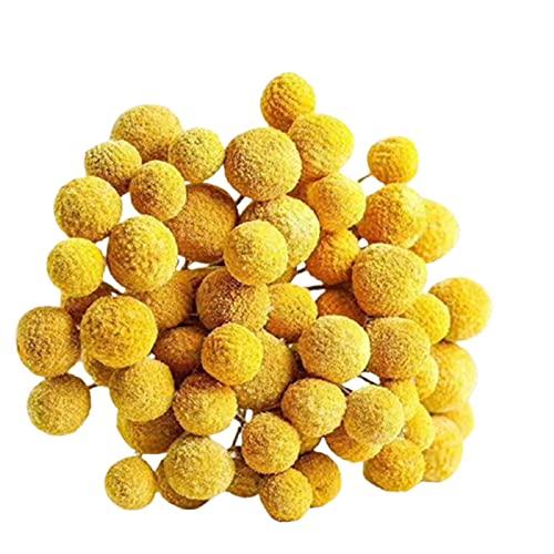 woyada 18 łodyg żółte kulki Billy suszone prawdziwy naturalny bukiet kwiatów Craspedia DIY ręcznie suszone kwiaty wyposażenie dekoracja do domu salonu