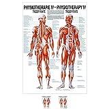 Sport-Tec Triggerpunkte Mini-Poster Anatomie 34x24 cm