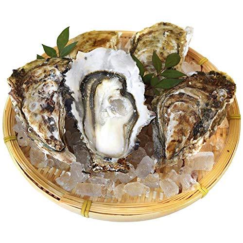 牡蠣10個入 冷凍殻付き牡蠣 産地厳選 加熱用(発泡箱入・牡蠣ナイフ・片手用軍手付き)海鮮バーベキューセット