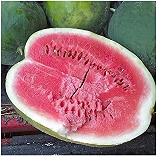 Best yellow belly watermelon Reviews