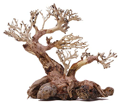 Bonsai Driftwood Aquarium Tree TNX Random Pick (6.5in H x 8in L) Natural, Handcrafted Fish Tank Decoration | Helps Balance Water pH Levels, Stabilizes Environments | Easy to Install