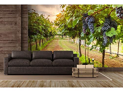 Papel Pintado para Pared Viñas | Fotomural para Paredes | Mural | Papel Pintado | Varias Medidas 350 x 250 cm | Decoración comedores, Salones, Habitaciones.