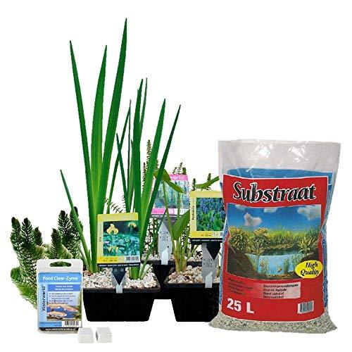 Waterworld Starter Teichpflanzen Paket Mini-Teich - 15er Set Wasserpflanzen, Winterhart - für 0,5-1 m³ Wasser - 1 Seerose, 6 Sauerstoff Pflanzen, 8 Sumpfpflanzen - Inklusive Pflanzkorb Sets