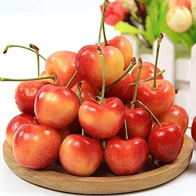 Sweet Cherry Tree Seeds-20 Cherry Seeds Shrub Prunus Cerasus Cherry-Tree Edible Fruit Seeds
