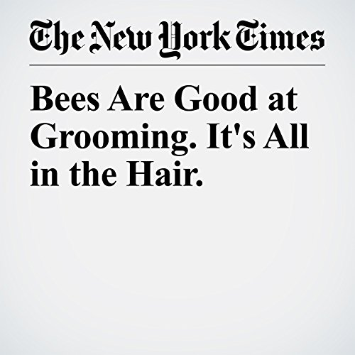 Bees Are Good at Grooming. It's All in the Hair. copertina