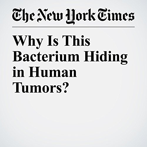 Why Is This Bacterium Hiding in Human Tumors? copertina