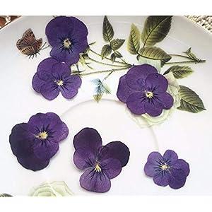 Silk Flower Arrangements Artificial and Dried Flower 120pcs Dried Pressed Purple Pansy Corydalis Suaveolens Hance Flower Plants Herbarium for Jewelry Pendant Earrings Making