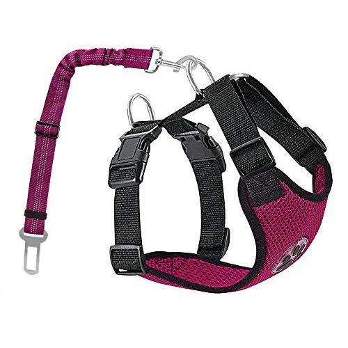 How to Attach Dog Harness