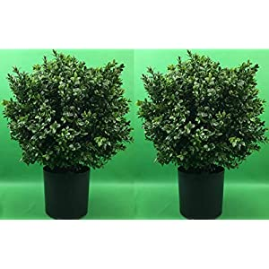 Silk Tree Warehouse Company Inc. Two 24 inch Tall Indoor Outdoor UV Rated Artificial Boxwood Topiary Ball Bush Potted 16 inch Wide
