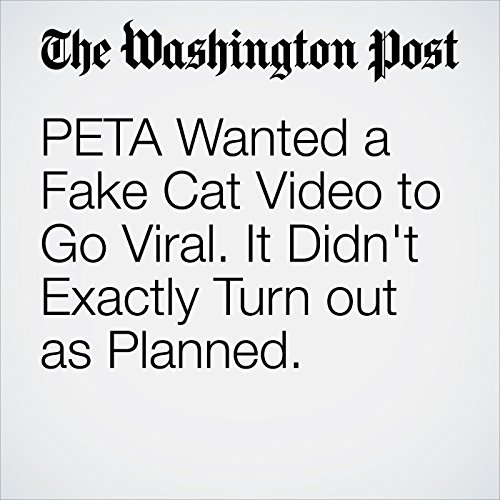 PETA Wanted a Fake Cat Video to Go Viral. It Didn't Exactly Turn out as Planned. copertina