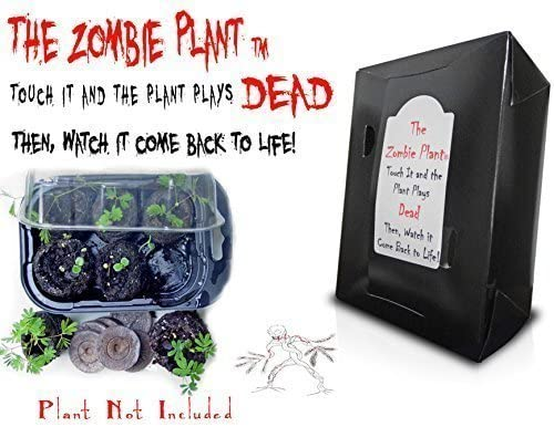 Zombie Plant Grow KIT- (Touch It and It Plays Dead!) Unique Nature Kit- Grow a Fun Interactive House Plant That Plays Dead When Touched & Comes Back to Life in Minutes! Great Birthday Gift Idea!