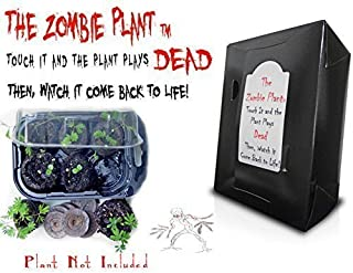Zombie Plant Grow Kit- (Touch It and It Plays Dead) Unique Nature Kit - Grow a Fun Interactive House Plant That Plays Dead When Touched & Comes Back to Life in Minutes. Amazing Year Round Gift Idea.