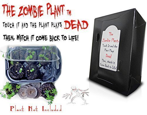 "SEE VIDEO ON THE LEFT OF THE ZOMBIE PLANT THAT ""Plays DEAD"" When You Touch it! Then Grow Your Own! UNIQUE & FUN INTERACTIVE ZOMBIE THEMED GIFT; This Christmas give someone special a whole bunch of chuckles and fun whenever they nudge this house plant..."