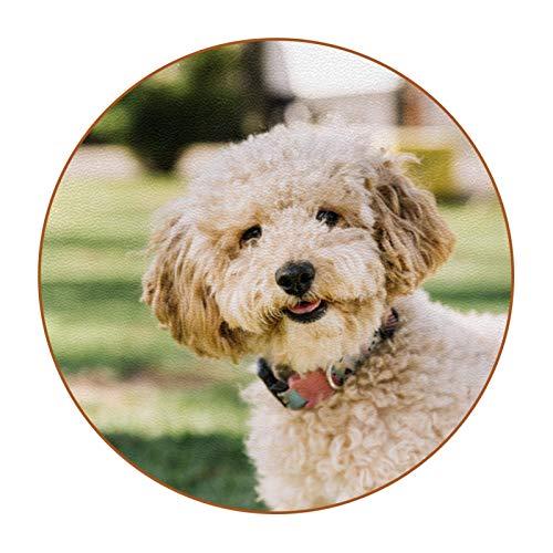 Bennigiry Juego de 6 posavasos de piel con diseño de perro que se diviertan en el parque