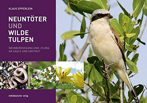 Neuntöter und Wilde Tulpen: Weinbergsfauna und -flora an Saale und Unstrut