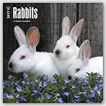 2017 Monthly Wall Calendar - Rabbits