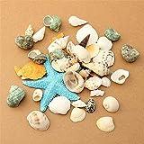 Plantas artificiales de acuario Artesanías naturales para acuario Decoración de peceras DIY Playa Mezcla de conchas marinas Mezcla de conchas marinas para el paisaje de la pecera (Color: C, Tamaño: Ta