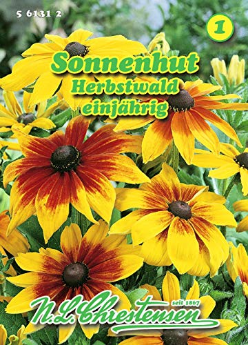 Rudbeckia hirta, Sonnenhut, Herbstwald gelbe, bronzen N.L.Chrestensen Samen