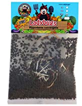 Buy ladybugs on Amazon.com to fight your leafhoppers