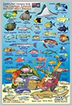 Cayman Islands Reef Creatures Guide Franko Maps Laminated Fish Card 4
