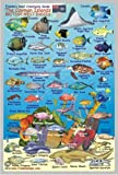 "Cayman Islands Reef Creatures Guide Franko Maps Laminated Fish Card 4""x6"""