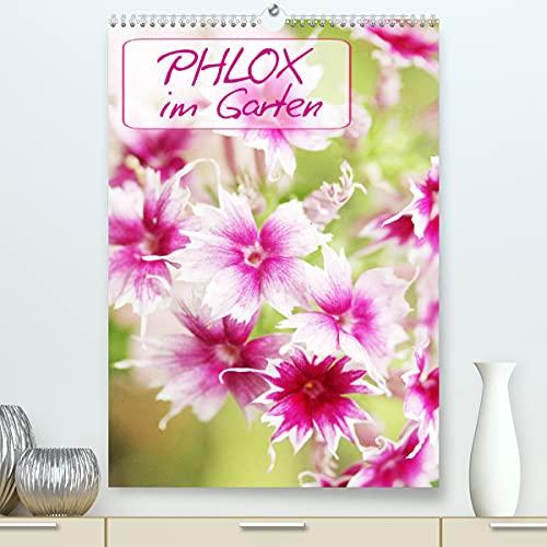 Phlox im Garten (Premium, hochwertiger...