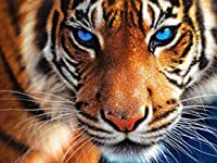 HANBIN ラインストーンビーズ刺繍キット 5Dステッチクラフト 30 * 40センチ DIY 5Dダイヤモンド塗装 家の壁の装飾 家の装飾用リビングルーム ラインストーン刺繍 家の装飾 Tiger
