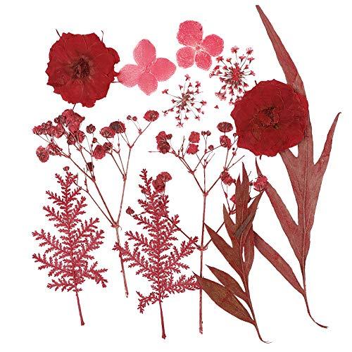 VINFUTUR Flores Secas Naturales Prensadas Plantas Secas Preservadas Pequeñas Surtidas para Decoración Tarjetas Álbum...