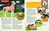 WAS IST WAS Pferde und Ponys: Reiten, Fohlen, Pferdesprache, Turniere, Zucht und Pflegepferd! (WAS IST WAS Edition) - 6