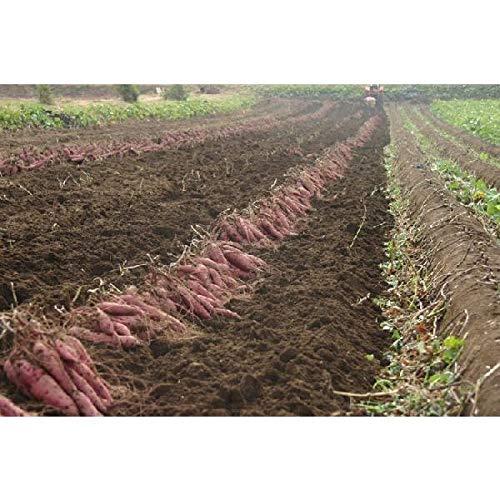 千葉県香取市産さつまいも新品種サツマイモ)「シルクスイート」 LMS混合5kg