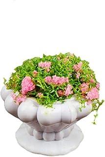 1/6 1/12 maison de poupée Miniatures Pots de fleurs Mini Vase en plastique plante verte bonsaï minuscule meubles accessoir...