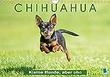 Chihuahua: Kleine Hunde, aber oho (Wandkalender 2020 DIN A4 quer): Chihuahua: Die kleinste Hunderasse der Welt (Monatskalender, 14 Seiten ) (CALVENDO Tiere)