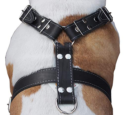 Best Harness for Rottweiler