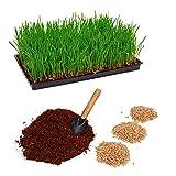 Pfotenolymp® Juego de plantas de hierba para gatos con cuenco de plástico – Cuenco de hierba para gatos – Juego de plantas listo con semillas y tierra – DIY – tierra de coco